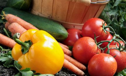 Organic Gardening for Less