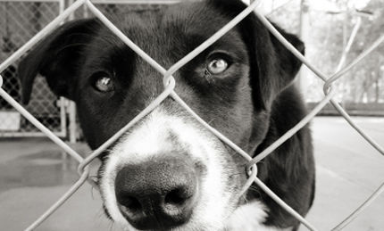 Supreme Court to Hear Animal Cruelty Case