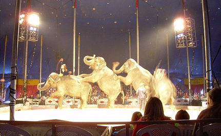 No Fun at the Circus for Tina, Jewel and Queenie