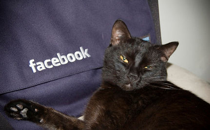Facebook's Animal Rights Group Reaches 3 Million: Using Social Media for Animal Welfare