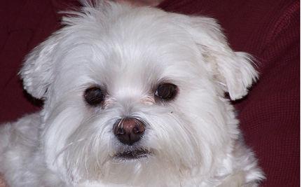 Canine Cancer Drug Approved