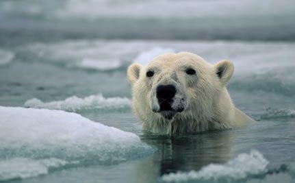 Alaska Temperatures Could Rise 13 Degrees F