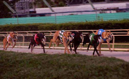 Greyhound Racing to End in Rhode Island!