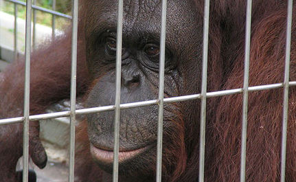Support Protection for Great Apes