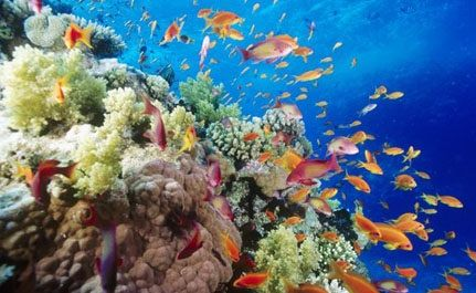 Global Warming Destroying World Coral Reefs, Costing Economy Billions