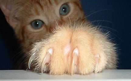San Fran Cats May Get To Keep Their Claws!