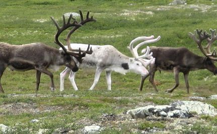 Reindeer Games We Don't Want To Play