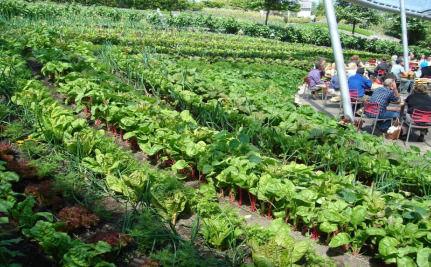 Small Farms Making a Big Comeback