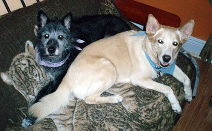 Rescue Pets of the Day: Shari and Brooke