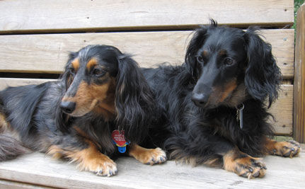 Rescue Pets of the Day: Sweet Pea and Sammie