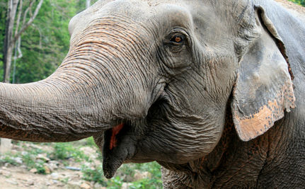 Free At Last But Far To Go: India Orders All Elephants Freed from Zoos & Circuses