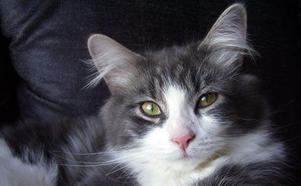 Rescue Pet of the Day: Friponne