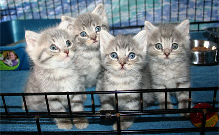 Kittens Remind Us: Spay & Neuter, and Adopt Shelter Pets