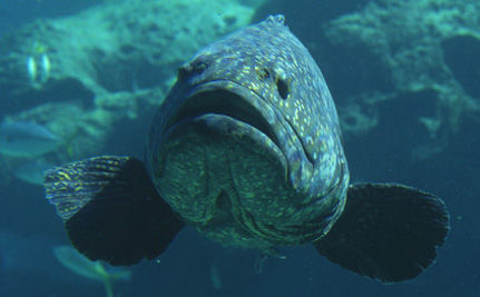 Last Chance to Save 10 Fish Species!