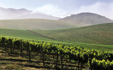 A California Winery Transforms Waste Into Energy