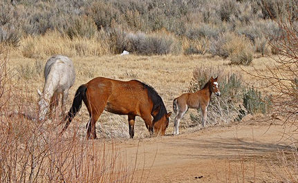 Could a Lawsuit Mean Life for Our Wild Horses?