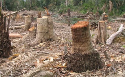 COPENHAGEN: Is The Deforestation Deal Cooked?