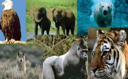 Is Earth On The Brink Of A Sixth Mass Extinction?