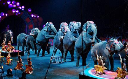 Elephants Lose Court Battle
