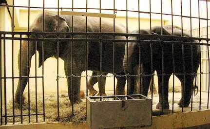 10 Worst Zoos for Elephants
