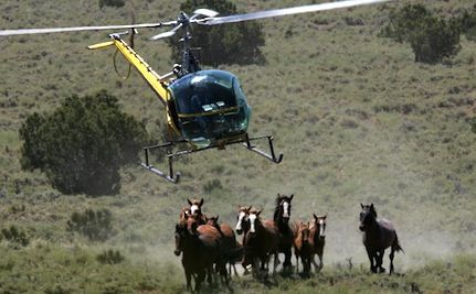 Federal Aerial Roundup Kills 9 Wild Mustangs in Nevada