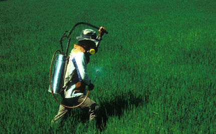 Pesticides and Parkinson's: Possible Link Must Be Investigated