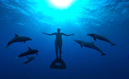 The Cove Wins the Oscar! All Eyes Turn To Japan…
