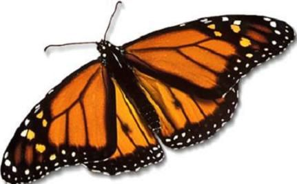 The Plight of the Butterflies