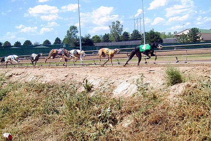 Greyhound Racing May Die Because It Is Bad Business