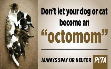�Octomom� Promotes Sterilization�For Animals