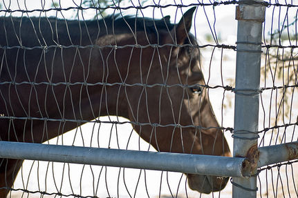 Don't Let U.S. Horse Slaughterhouses Return