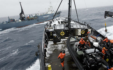 Sea Shepherd Cuts Japan Whalers Quota In Half