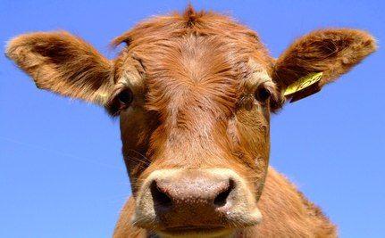 UN Report Critic Has Undisclosed Meat Industry Ties