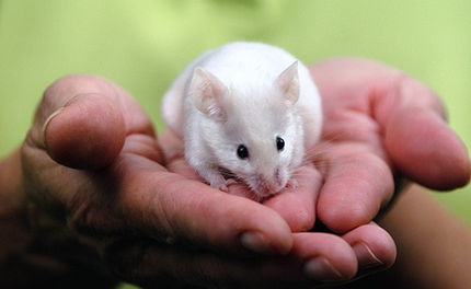 Give Them a Voice: World Week for Animals in Labs