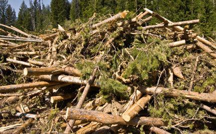 America Has Higher Percentage of Deforestation Than Brazil
