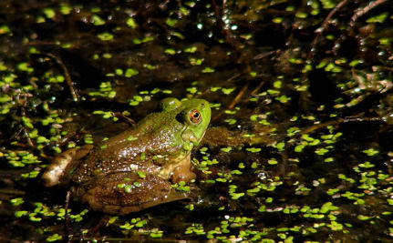 It's Save The Frogs Day! 3 Things You Can Do To Help