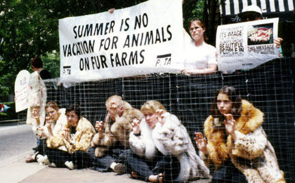 Cach� Stops Selling Fur, Saving Countless Animals