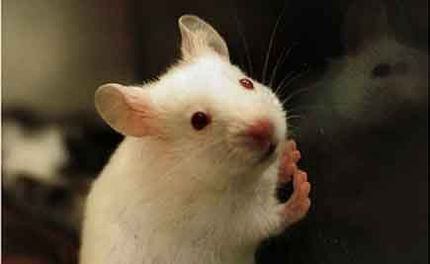 Study Finds Mice Express Pain Facially�Just Like Us