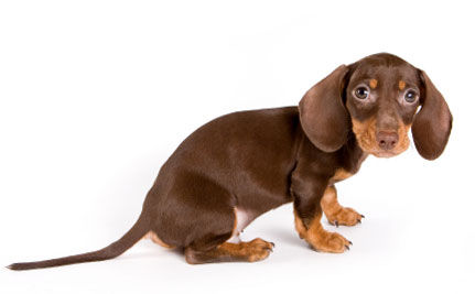 Puppy Killer Gets Shocking Sentence