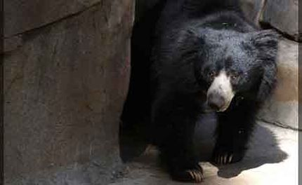 Largest B2B Site Bans Sales of Bear Bile Products and More