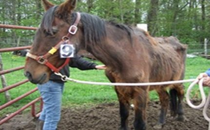 Emaciated Horses, Cows and Goats Rescued Thanks to Collaboration of Humane Organizations