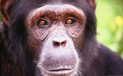 Owner of Chimp Who Attacked Friend Dies
