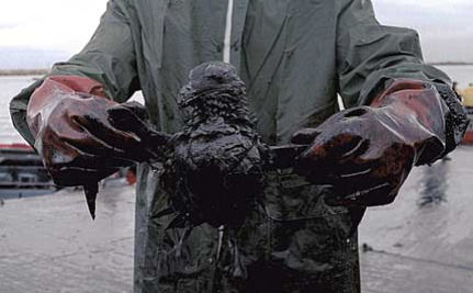 Gulf Oil Spill: 10 Horrifying Facts You Never Wanted To Know
