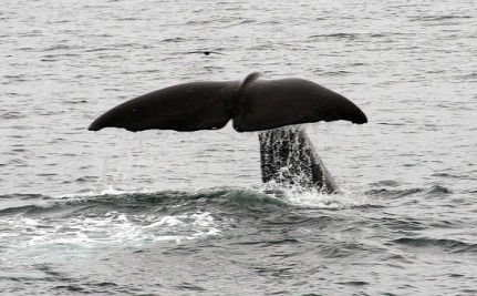 Whale Feces Is Key To Southern Ocean Carbon Sink