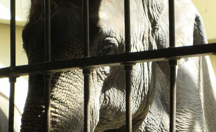 Join the International Day of Action for Elephants in Zoos