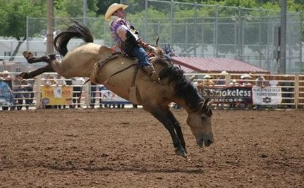 The Abusive World of Rodeos