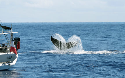 A Victory For Whales: Plan To Legalize Whaling Fails