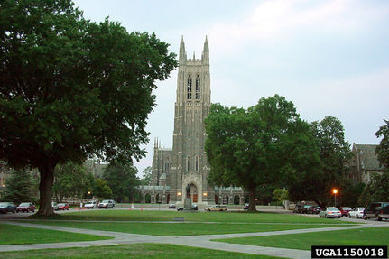 Is Homophobia Heating Up at Duke?