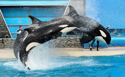 Renowned Travel Writer Apologizes For Past Support of SeaWorld
