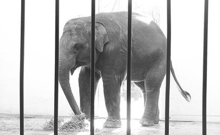 Taxpayers Sue over Mistreatment of Elephants at the Woodland Park Zoo